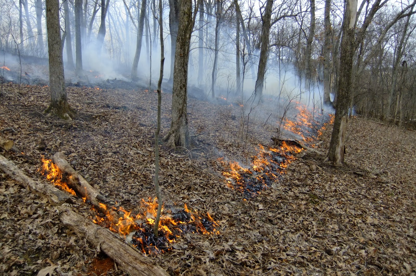 Fire moving up the hill in our woods