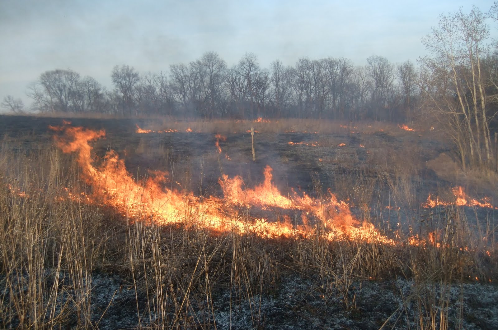 Burning 5 acres of our 60 acres.