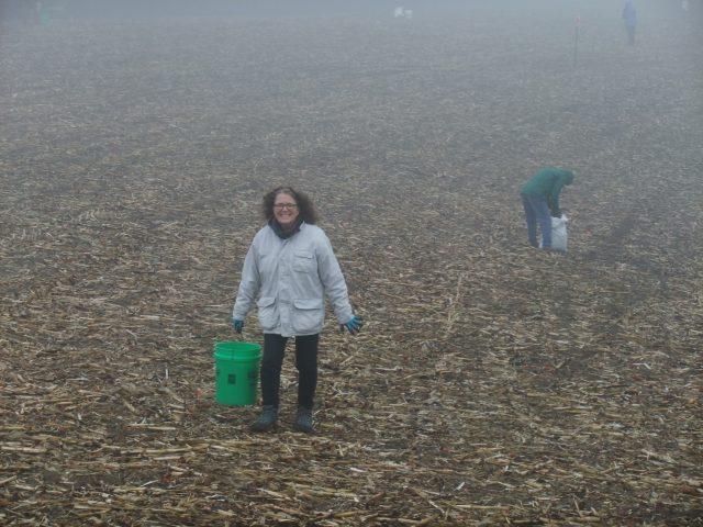 Prairie planting, Savanna Prairie