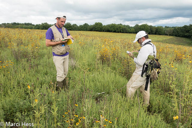Plant surveying of the Deer Camp Prairie, a 2-year-old planting.