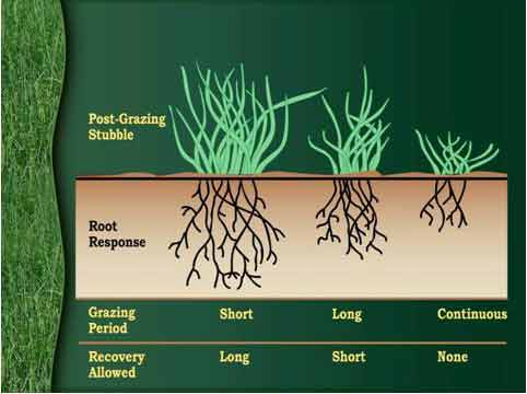 Rotational grazing, Managed grazing