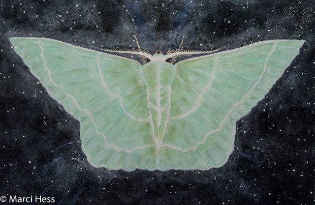 Synchlora aerata, Wavy-lined Emerald Moth