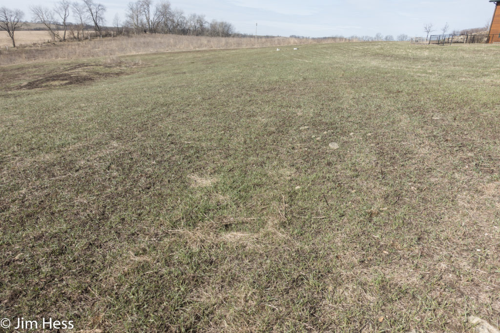 Cool season grass treatment appears as if no native ecosystem exists.