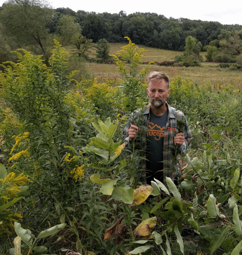 Andy showing the tall growth of untreated Canada goldenrod.