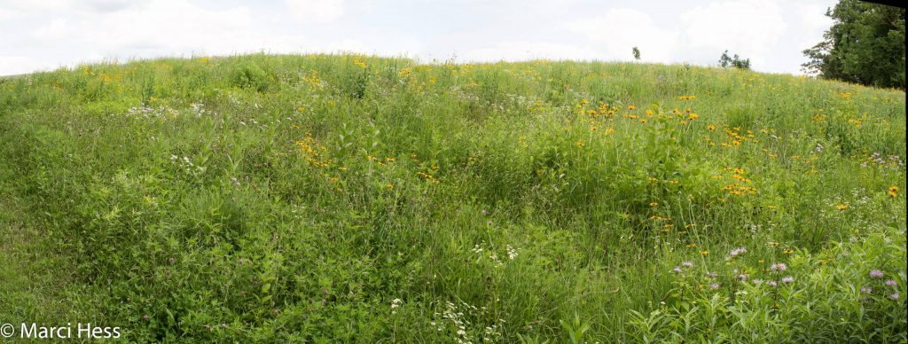 A panorama of the North Prairie in July 2020
