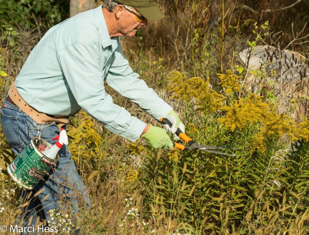 Jim is lopping the blooms off the goldenrod